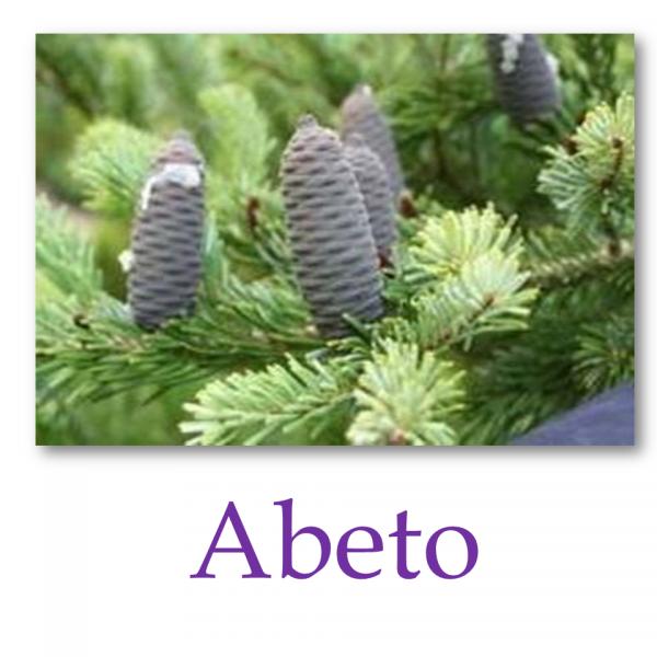 Abeto