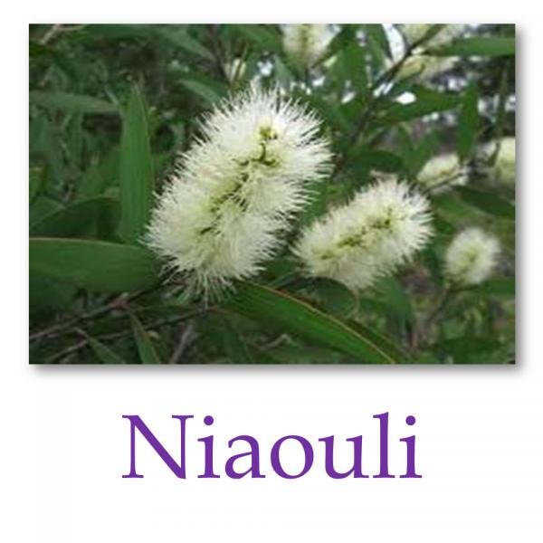 Niaouli
