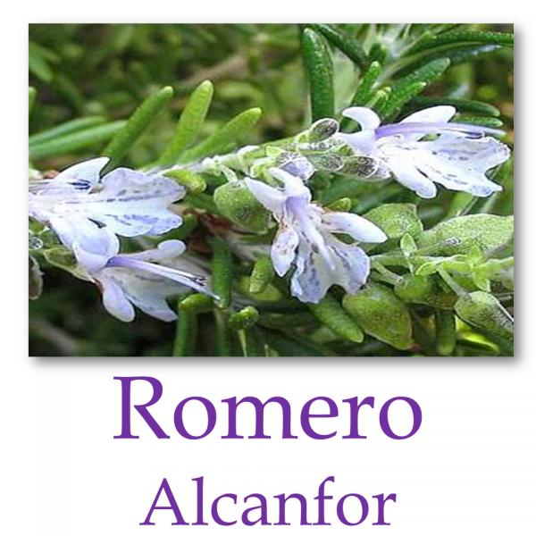 Romero Alcanfor