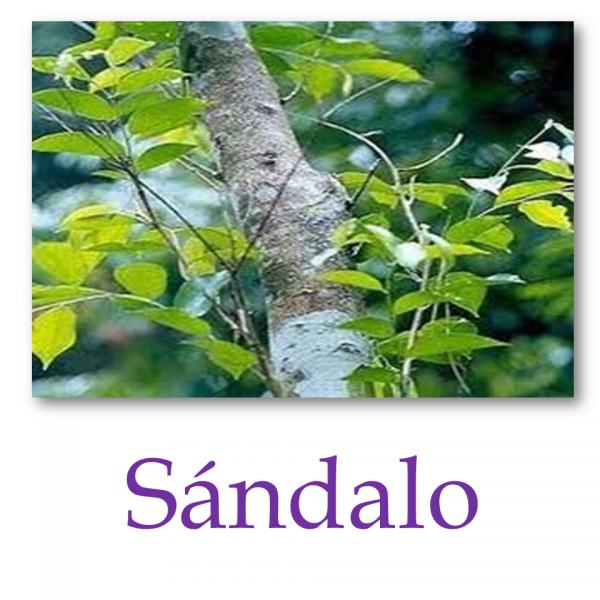 Sándalo