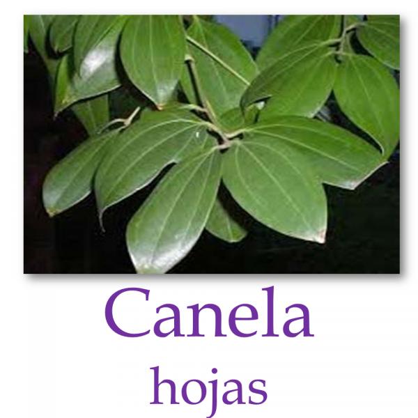 Canela Hojas