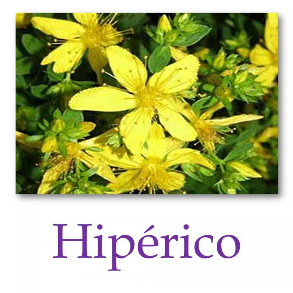 Hipérico o Hierba de San Juan