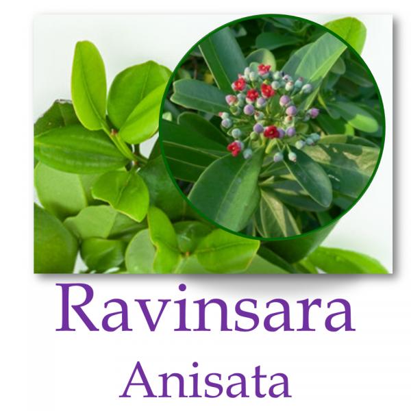 Ravinsara Anisata